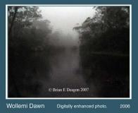 wollemi dawn